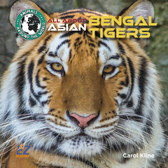 All About Asian Bengal Tigers