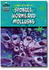 A Project Guide to Sponges, Worms, and Mollusks
